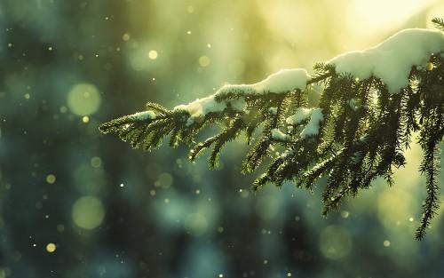 TNKLR. FOTO_Ar girdėjai kaip sninga_